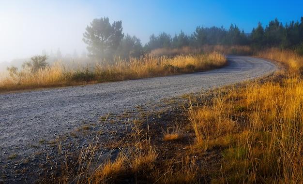 Paisaje de verano con carretera