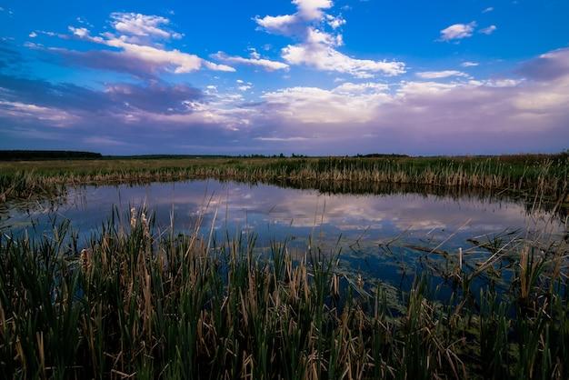 Paisaje de verano con un estanque en el campo con un hermoso reflejo del cielo en el agua
