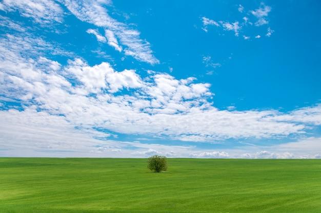 Paisaje de verano hermoso cielo con nubes y árbol solitario en el campo.