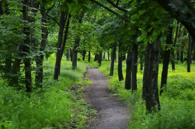 Paisaje de verano en madera verde.