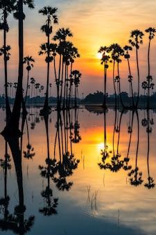 Paisaje vertical de palmeras de azúcar con la reflexión del horizonte sobre el agua al amanecer, dongtan sam khok, provincia de pathum thani, tailandia. famoso mirador de viajes y fotografías en un país tropical, siam.