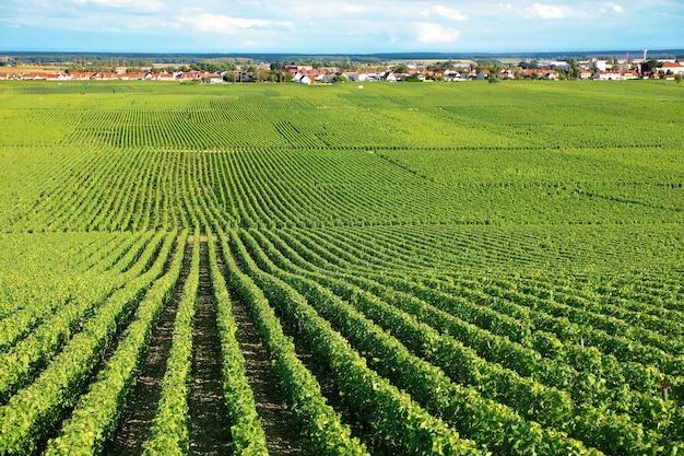 Paisaje de viñedo en francia