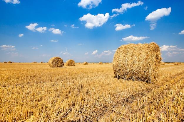 La paja puesta en una pila después de la cosecha de cereales.