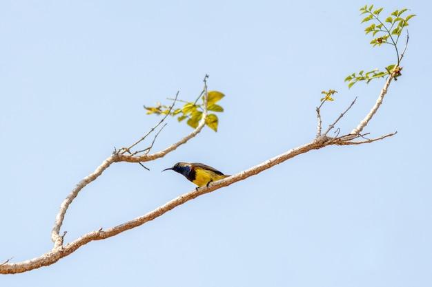 Pájaro en el árbol