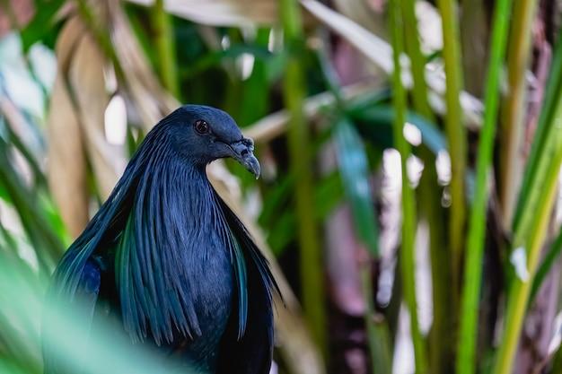 Pájaro azul colorido
