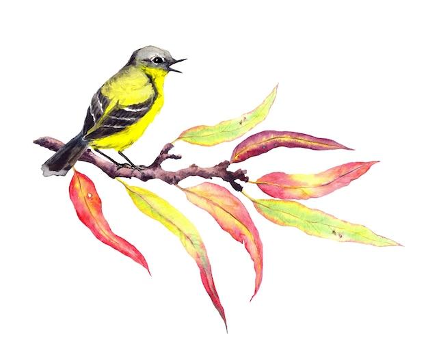 Pájaro de canción lindo en la ramita de otoño con hojas rojas y amarillas. acuarela