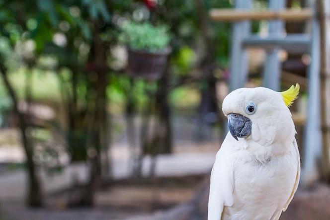 Pájaro de cockatoo de cresta amarilla en el zoológico