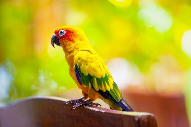 Pájaro loro en primer plano de maldivas
