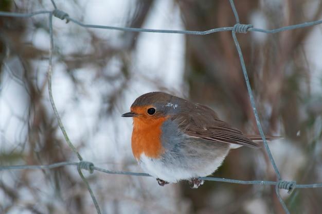 Un pájaro en la nieve