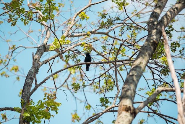 Pájaro en la rama de un árbol, y cielo azul