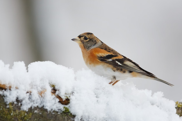 Pájaro en una rama de árbol cubierto de nieve