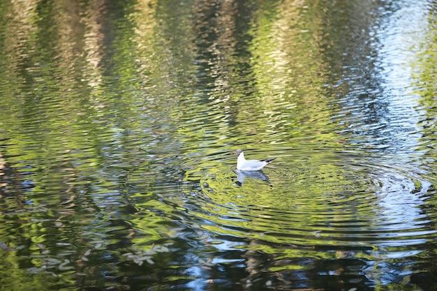 Un pájaro se relaja en un estanque en un lago en un día soleado. los nenúfares se balancean en el fondo.