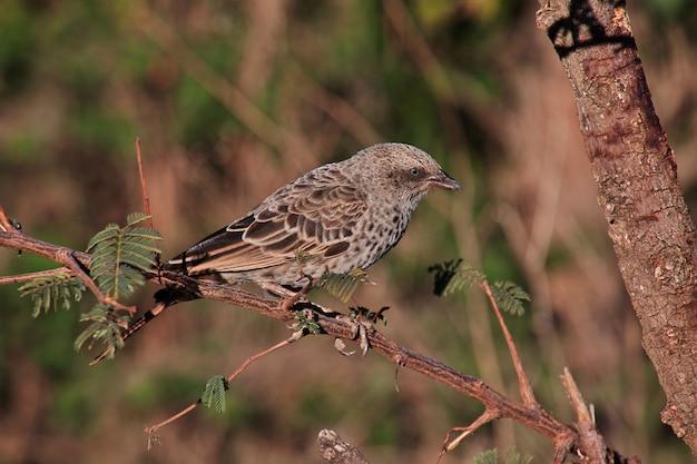 Un pájaro en safari en kenia y tanzania, áfrica