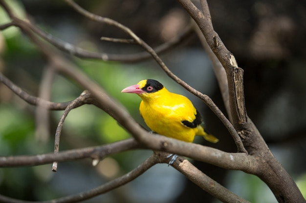 Pájaro salvaje amarillo