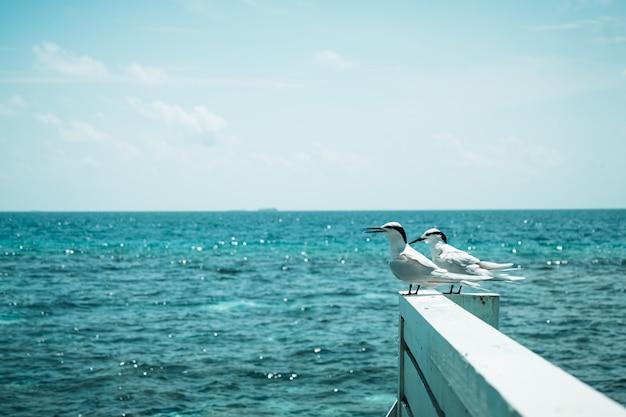 Pájaros blancos con mar en maldivas