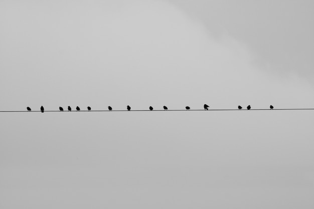 Pájaros sentados en un alambre con un fondo gris