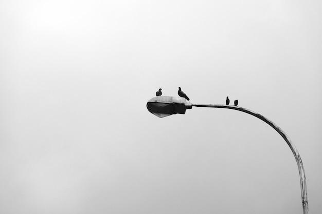 Pájaros sentados en un poste de luz