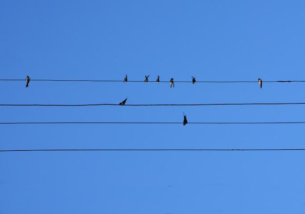Los pájaros se sientan en los cables