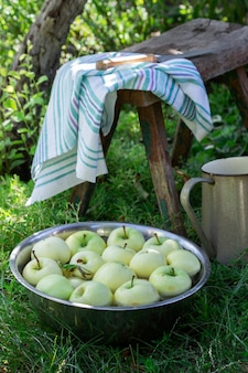 Una palangana con agua y manzanas en el fondo de un jardín de verano.