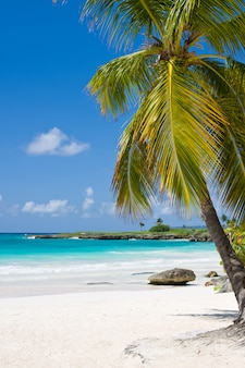 Palm beach en la idílica isla paradisíaca tropical - caribe - república dominicana punta cana