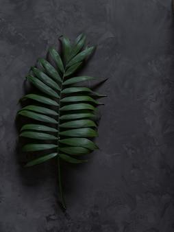 La palma deja un sobre fondo negro con sombras.