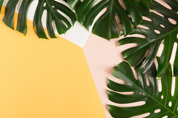 La palma tropical monstera se va en el fondo amarillo y rosado del verano. vista plana, vista superior