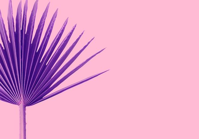 Palmas violetas hojas sobre un fondo rosa