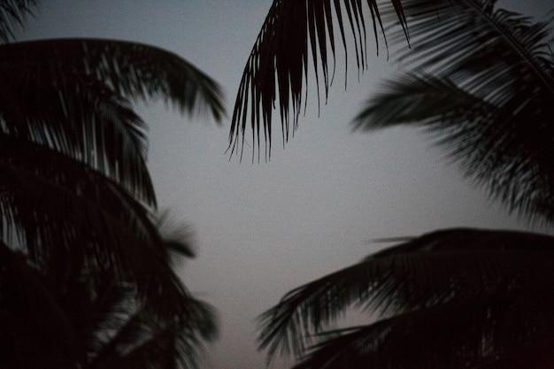 Palmera en blanco y negro silueta de sombra hermosa hoja de coco en la playa naturaleza desenfoque patrón de rama oscura en día tropical, vintage, vacaciones de verano