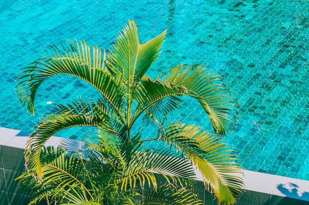 Palmera de coco alrededor de la piscina