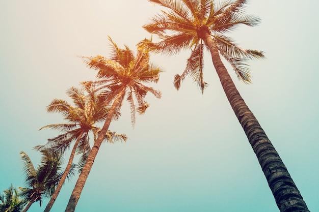 Palmera de coco y cielo azul con filtro vintage.