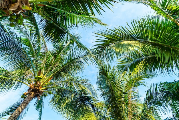Palmera de coco con cielo azul