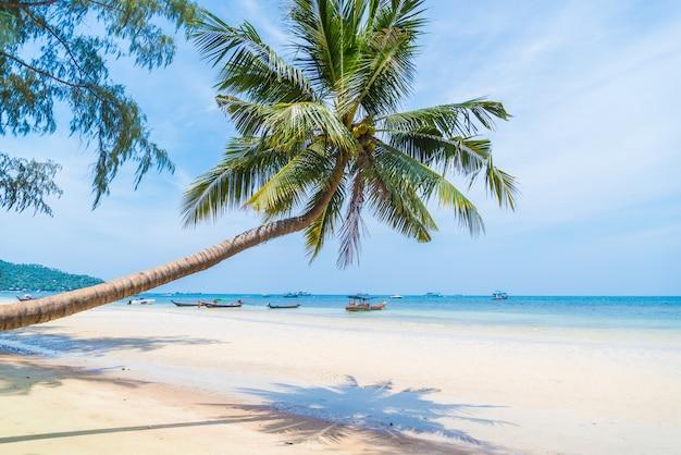 Palmera de coco con cielo para el verano y la playa.