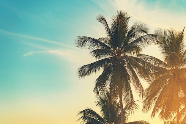 Palmera del coco en la costa tropical en playa de la isla con tono del vintage.