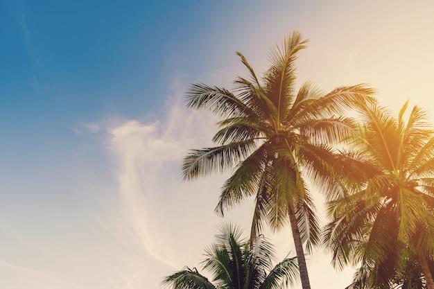 Palmera de coco en la costa tropical con tono vintage