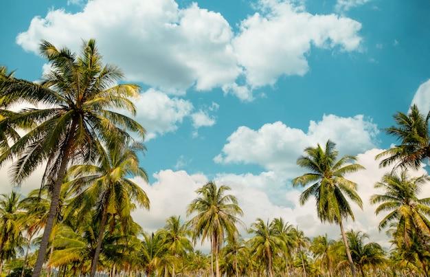 Palmera de coco y nube sobre cielo azul