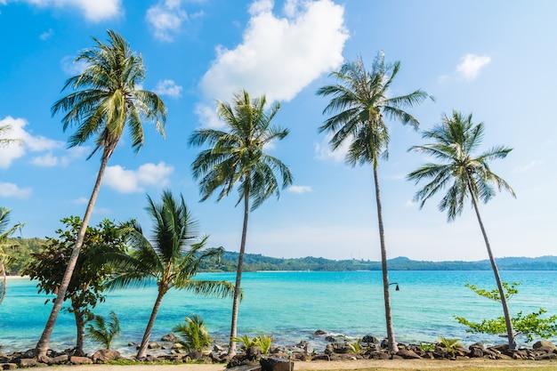 Palmera de coco en la playa y el mar