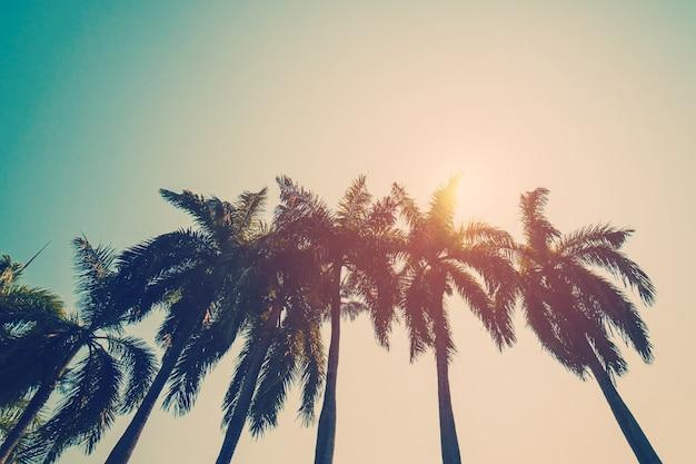 Palmera de coco en la playa en verano con efecto vintage.