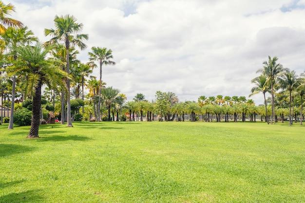 Palmera en escena de hermoso parque en el parque con el campo de hierba verde