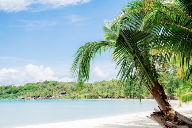 Palmera en la playa con el cielo azul.