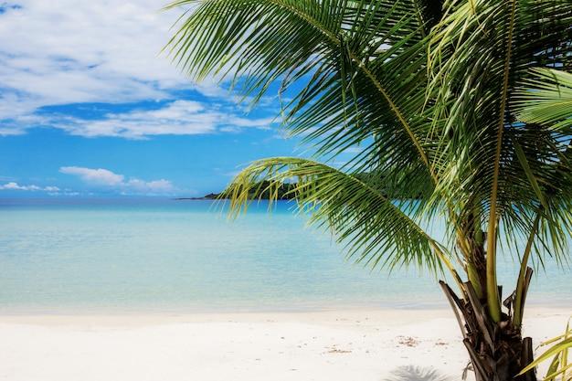 Palmera en la playa con cielo azul.