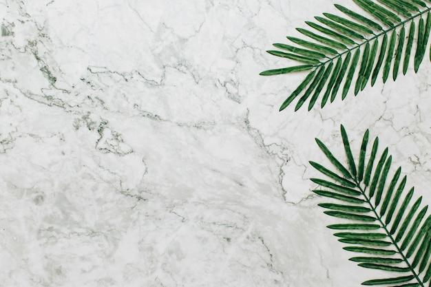 Palmera sobre fondo de textura de mármol