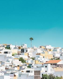 Una palmera sola en el top de una colina en un pueblo en andalucía, españa.