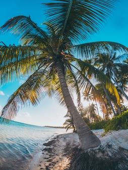 Palmeras caribeñas en la playa