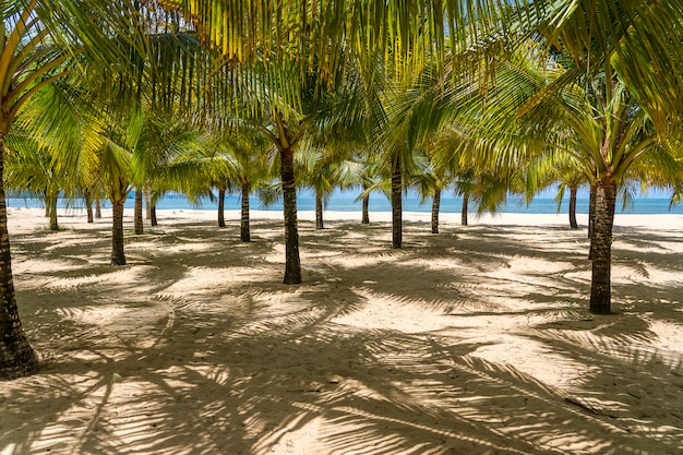 Palmeras de coco en la playa de arena blanca cerca del mar del sur de china en la isla de phu quoc, vietnam. concepto de viaje y naturaleza