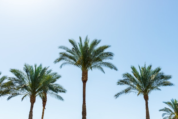 Palmeras de coco sobre fondo de cielo azul