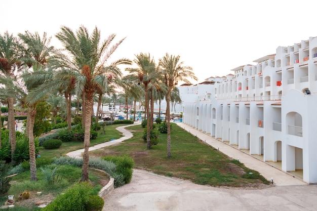 Palmeras datileras en el territorio del hotel junto al mar.