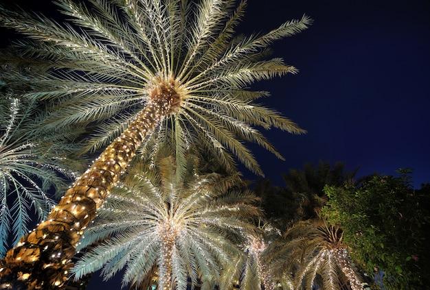 Palmeras decoradas con guirnaldas navideñas de noche