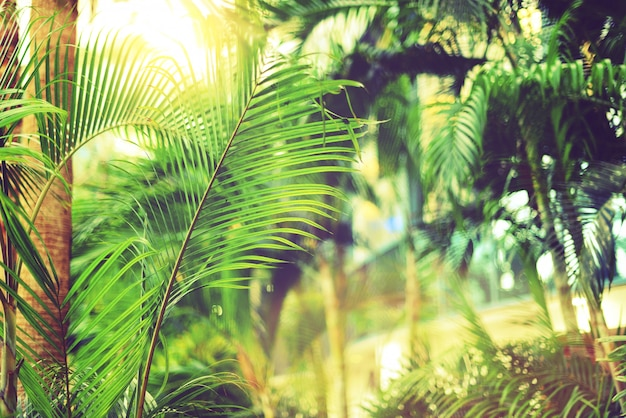 Palmeras sobre cielo. concepto de verano, vacaciones y viajes con copia espacio.