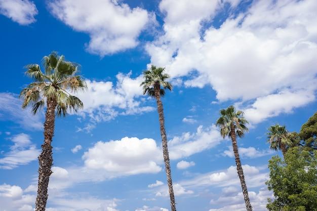 Palmeras tropicales en el fondo de un cielo azul con nubes blancas veraniegas.