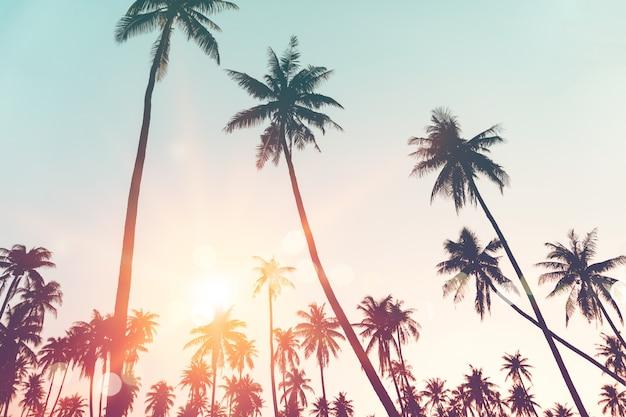 Palmeras tropicales o cocoteros en el cielo y la luz del sol.